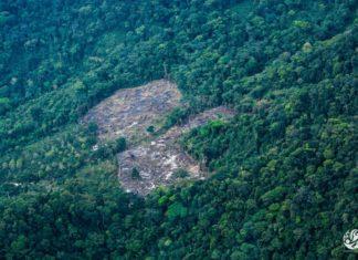 Foto: Fundación para la Conservación y el Desarrollo Sostenible.